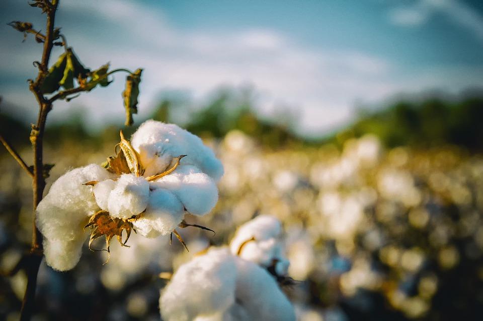 Tænker du på vand, når du shopper bomuldsprodukter?