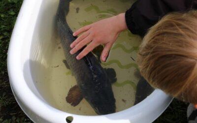Find den største fisk